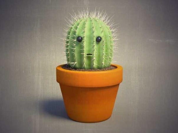 КАКТУС ДОЛЖЕН БЫТЬ В КАЖДОМ ДОМЕ Кактус это колючее растение, которое знает каждый человек. Кто-то использует его для интерьера в доме, кто-то любит выращивать и ухаживать за растениями, а