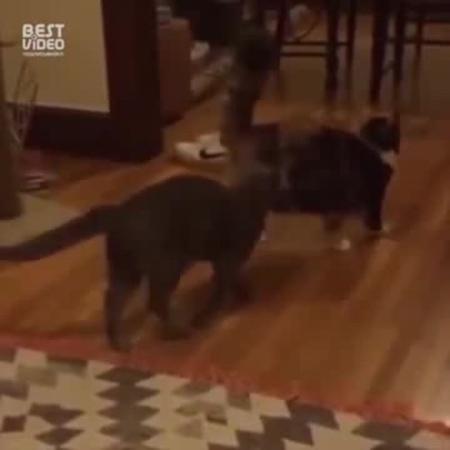 CatsMatrix