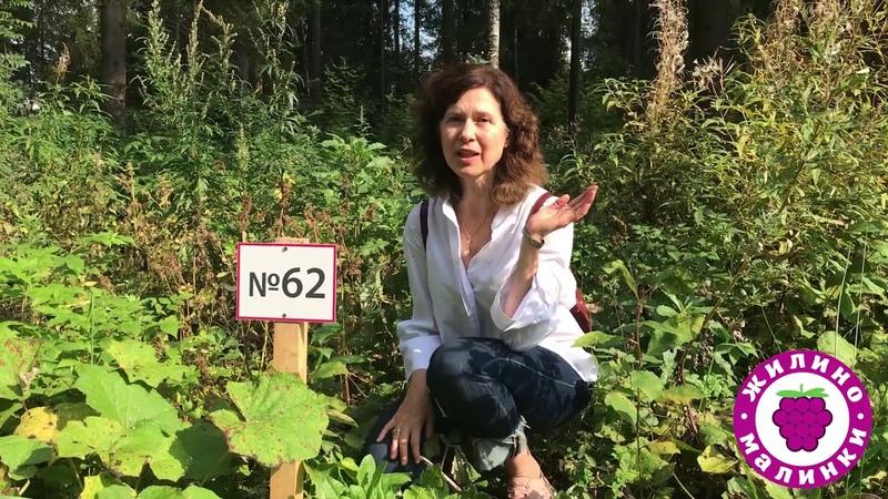 Участок № 62 (лесной) - посёлок Жилино-Малинки