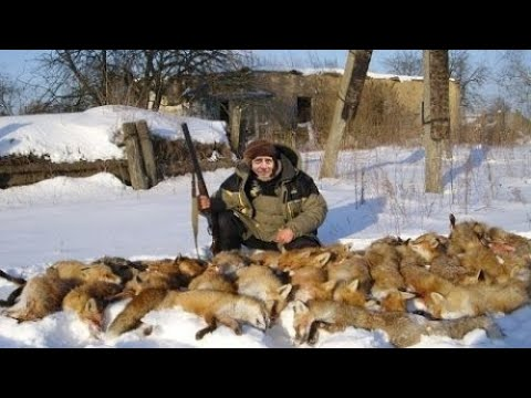 Охота на лису! Сразу Дуплет! Такого ты еще не видел! Fox Hunt