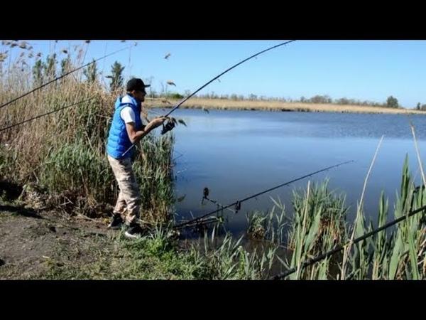 Жаркая Рыбалка на Сазана Ловля сазана в Краснодарском Крае