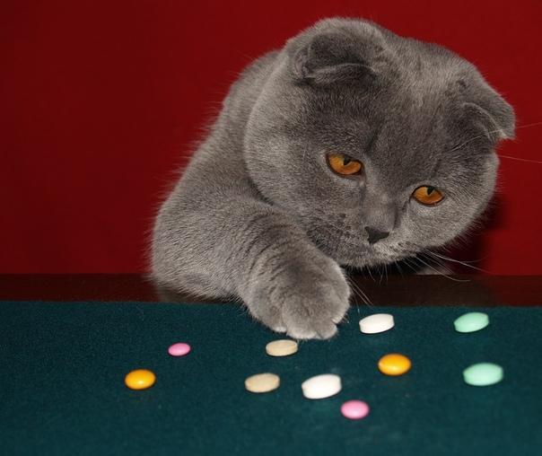 Коты с таблетками картинки