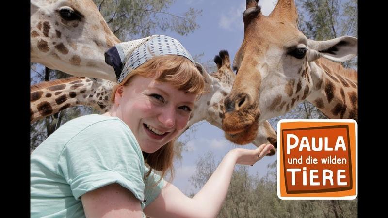 Kopf hoch, Giraffe! (Doku)   Reportage für Kinder   Paula und die wilden Tiere