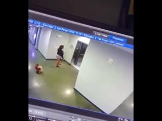 Следите за своими псами