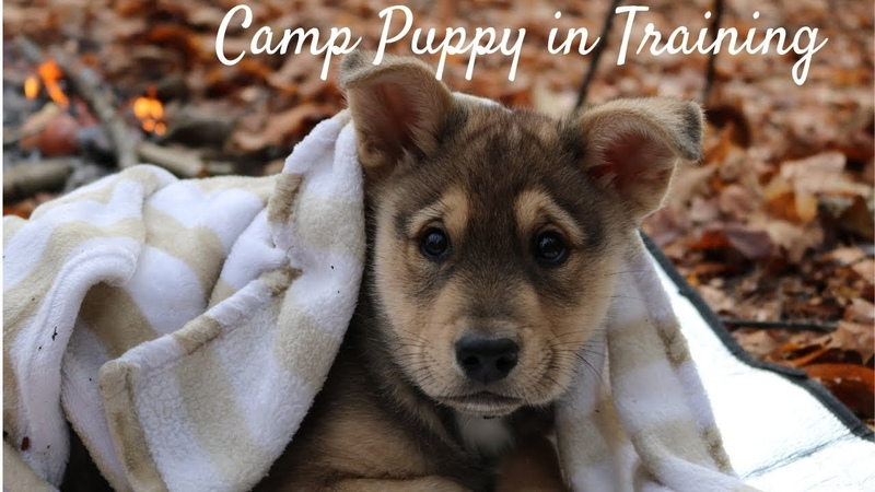 Bushcraft Breakfast with my Puppy | Cowboy Coffee, Eggs on the Coals in their Shell |