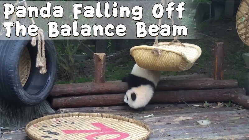 Xing Qing Embarrasses Herself By Challenging The Balance Beam iPanda