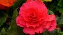 FLOWERS JUST FOR YOU - ERNESTO CORTAZAR - MI AMOR POR TI