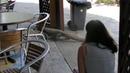 Официантка вытащила метрового варана из ресторана за хвост. Видео.