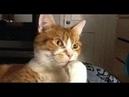 Приколы с котами Добрый позитив Видео про котов КошкиЖивотныеСоздай себе хорошее настроение