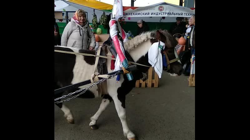 Ярмарка сельхозпродукции в Агропарке города Казани