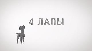 Собака, которая съела 10 монет, и постояльцы приюта для кошек «9 жизней»