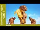 Шелли снова в деле (2015) Комедия, среда, 📽 фильмы, выбор, кино, приколы, топ, кинопоиск