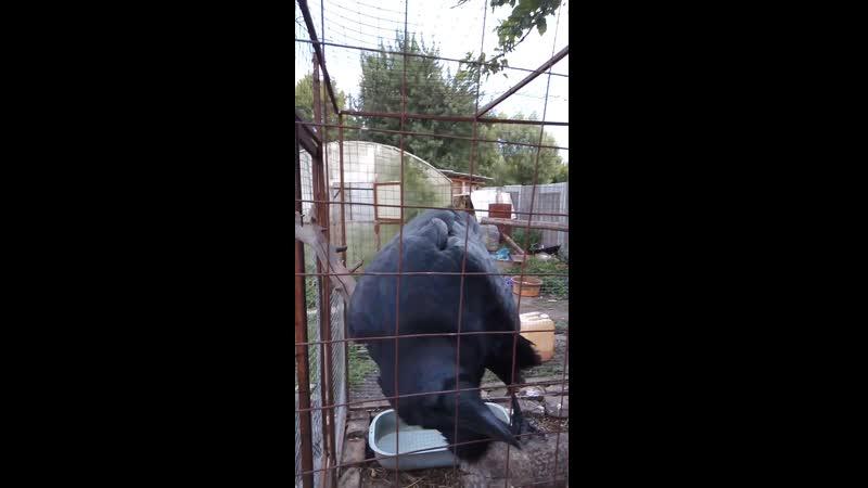 Сокол Пустельга - Нюша и вОрон - Крон . 13.08.19 г.