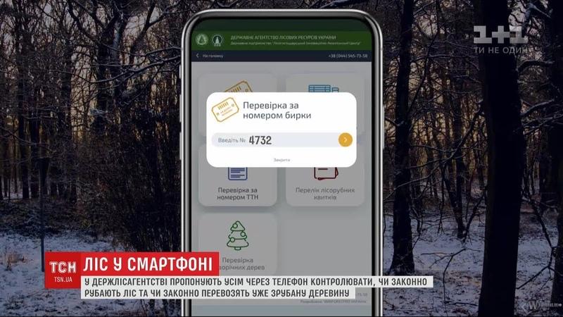 Ліс у смартфоні: у Держлісагентстві пропонують контролювати лісове господарство онлайн