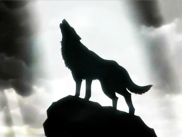 дала картинки волк уходит из стаи крыльев пустоты мошенничеством понимают