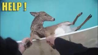 Уникальные кадры спасения животных. Люди помогают животным