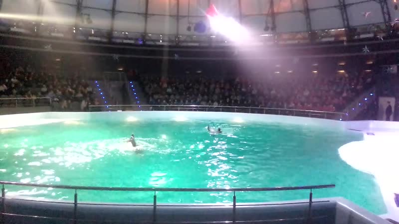 дельфины танцуют с дресировщиками