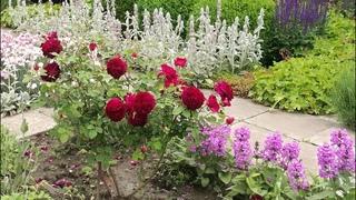 . Часть 2, фото восточного розария и роз с названиями сортов.