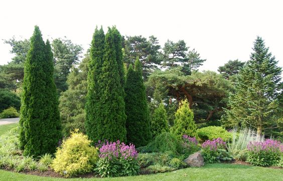 Хвойные растения: советы по подбору и посадке, изображение №7