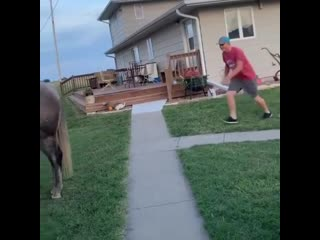 А нечего было на лошадку прыгать!
