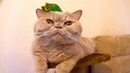 Cute cat Marsik and funny parrot Kesha 😊