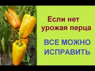 Чем полить перец для роста, завязей и увеличения урожая 🌶 Выращивание перца