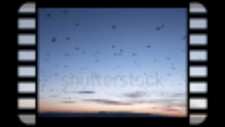""""""" Beautiful   Relaxing   Music   Flock   of   Birds   at   Sunset   J S   Bach   Music """""""