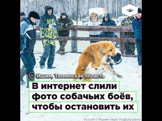 В Тюменской области в интернет слили фото собачьих боёв, чтобы остановить их I ROMB
