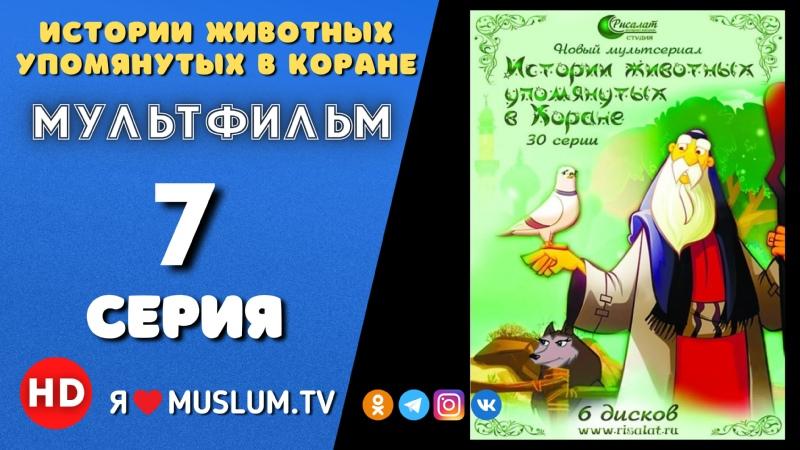 7 серия 1 часть Истории животных упомянутых в Коране История волка и Пророка Юсуфа