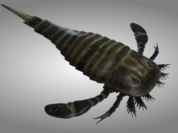 Ракоскорпион. Это гигантское морское существо выглядело как некая помесь скорпиона и омара с сужающимся хвостом и плоскими плавниками. Ракоскорпионы, хоть и похожи на современных скорпионов, всё