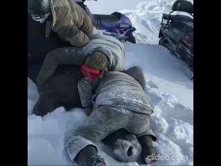 Видео 18+: троих жителей Тверской области подозревают в жестоком убийстве лосихи