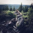 Фотоальбом Olya Shcheblykina