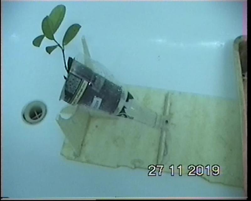 Способ борьбы с белокрылкой,паутинным клещём,тлёй  на растениях дома