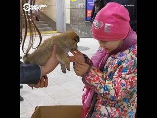 Елена из Могилева спасает бездомных животных
