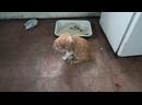 Эльдар Богунов лечит рыжего глаз, после удара кота