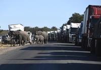 В Китае следят за беспрецедентной миграцией стада слонов.