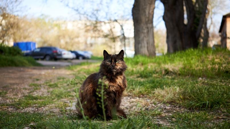 Коты Бориса Панкина VIChTOmEjBg