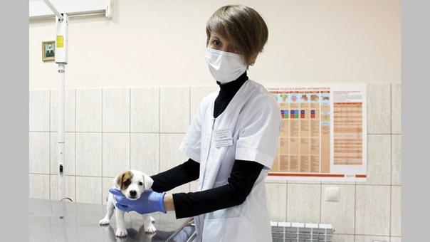 Жители Новочеркасска 30 сентября могут стерилизова...