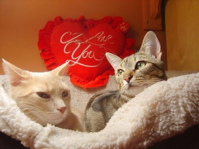 УДИВИТЕЛЬНО, НО ФАКТ… (Часть 55) (спецвыпуск: «Традиции празднования Дня святого Валентина»), изображение №5