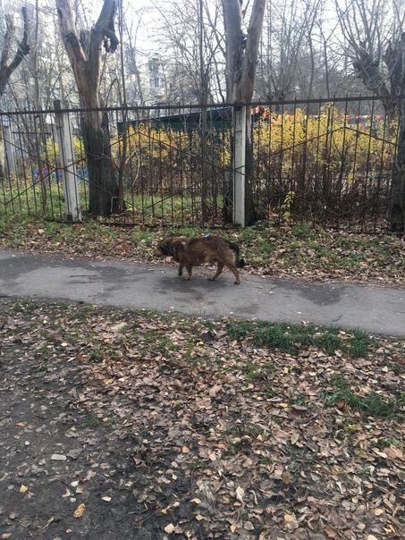 Час назад (в 14:30) у детского сада N79 (раон Строителей,сзади ДоДо пиццы ) видели собаку с... [читать продолжение]
