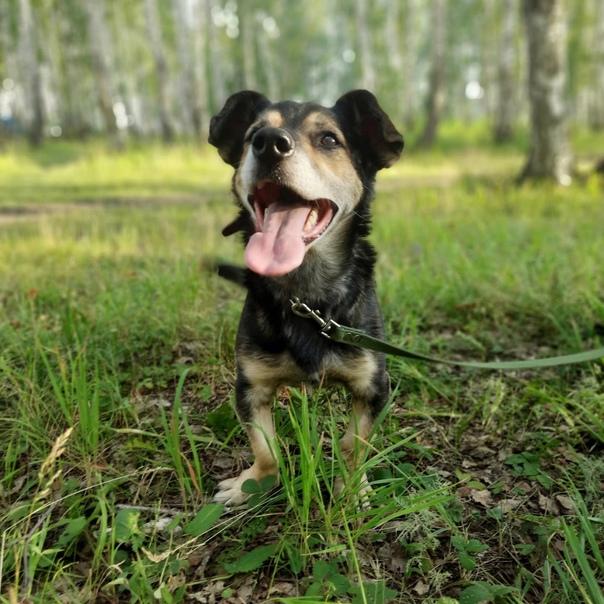 🤗Ричард — красивый взрослый пес с гордой осанкой. Его био...