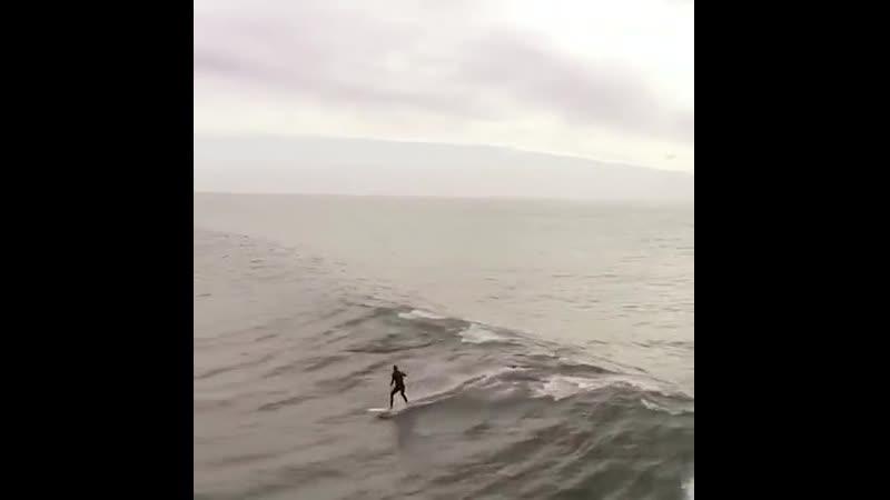 Дельфины перегоняют.