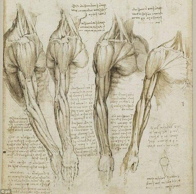Невeроятный анaтомический риcунок от Леонардо да Винчи (1452-1519)Талантище!