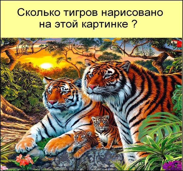 сколько тигров на картинке загадка том, как это