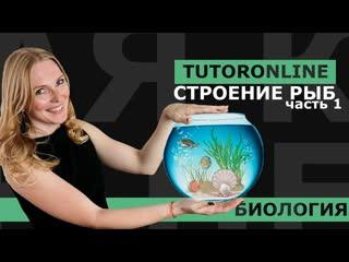 Биология - Внешнее строение рыб и cкелет (отрывок из Курса по Биологии)