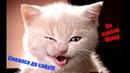 Смешные видео про кошек Прикольное видео про кошек