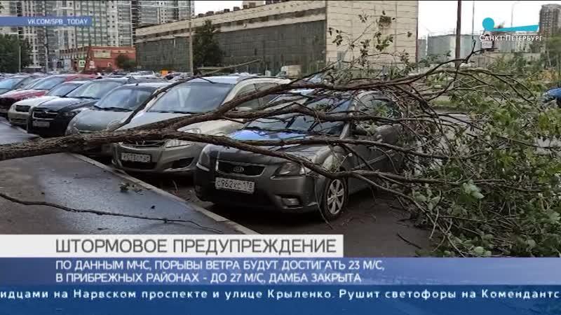 В Петербурге штормовой ветер валит деревья на дома и автомобили