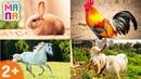 Развивающий мультик - учим животных Для самых маленьких Домашние животные Карточки Домана