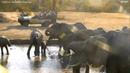 Посмотрите это видео на Rutube «Здесь люди не убивают слонов, а те не обижают людей. У водопоя Нкорно в Южной Африке.»