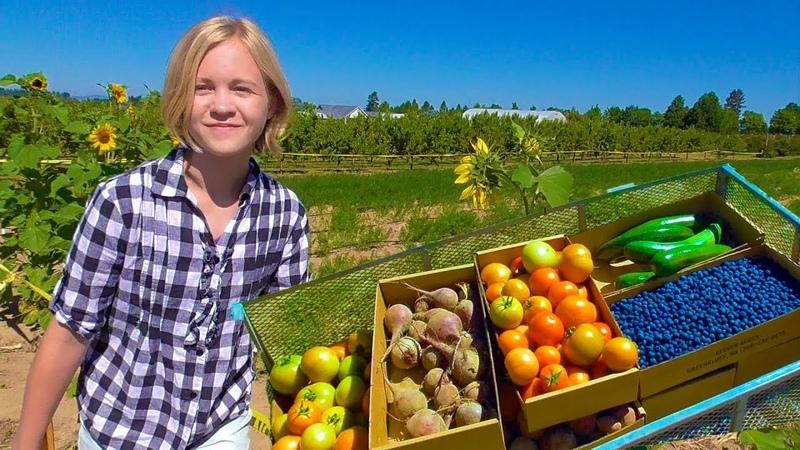 Сами собираем урожай НАША ЛЮБИМАЯ АМЕРИКАНСКАЯ ФЕРМА На наш дом падает дерево